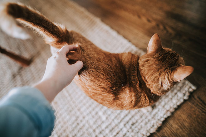 The Advantages Of Renting With Your Pet
